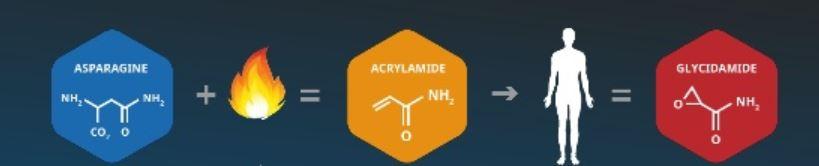 Schadelijk acrylamide in het lichaam